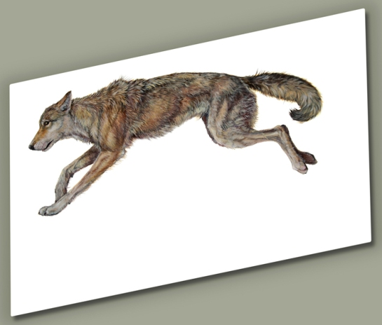 Hunting-Wolf_Hazel-Mountfor